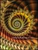 Polished Spiral